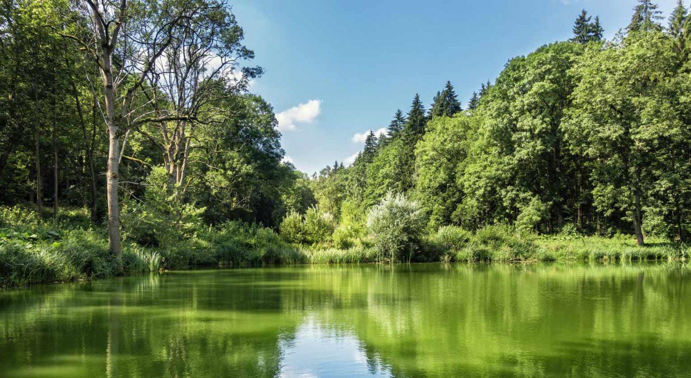 <small>Inwestycja przy lesie</small><br />Dąbrówka